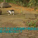 猫 ドラマ 放送地域